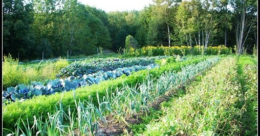 ekologiska, tärdgård, grönablad, egna, raw food cafe, odlar, odling,  hemleverans, ekolådor, ekolåda