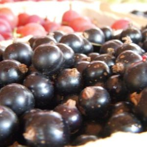 svarta vinbar