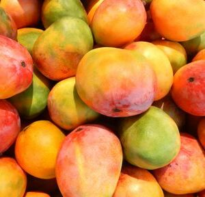 mango-at-the-market-506813675-587e60f53df78c17b6967f5e