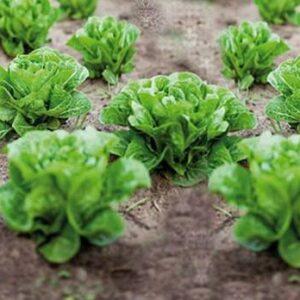 Vårt mål är att odla supergoda, nyttiga grönsaker,  frukter och bär. Ekologiskt förstås. Och i en rik, levande jord, så att smaken blir den allra bästa.