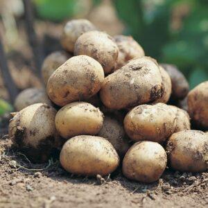 Potatis Connect