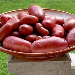 Potatis cherie